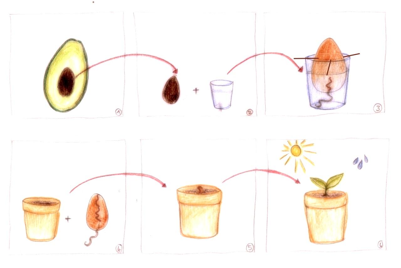 avocado_handmade_vari